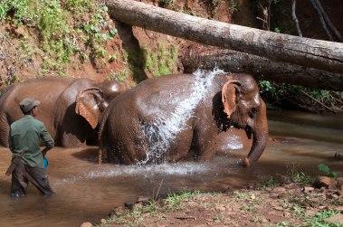 Elephant Manout-1-2