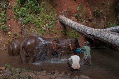 Elephant Manout-1