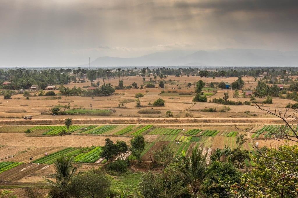 Kampot Tea