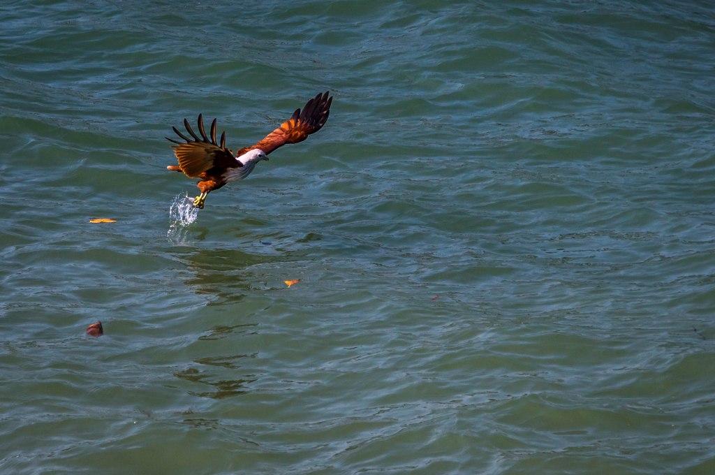 Seaeagle catch
