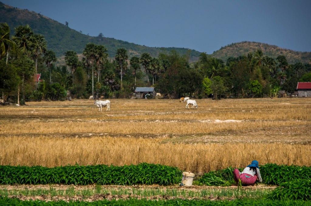 Picking crops